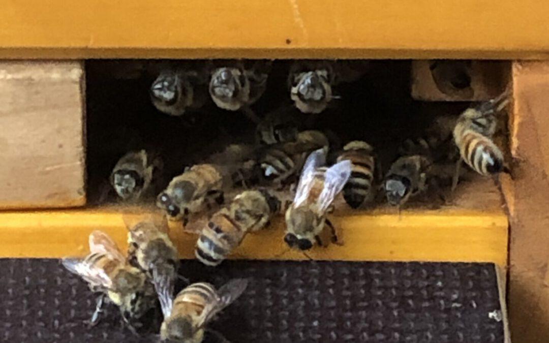 Fluglochverteidigung vor Wespen