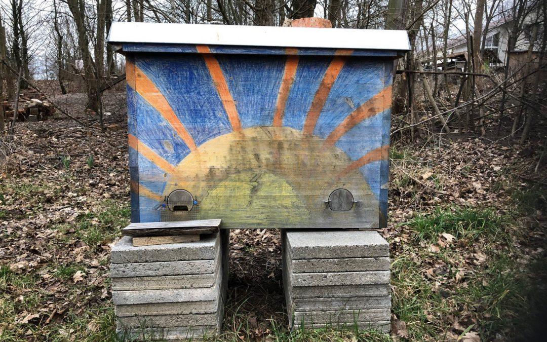 Einraumbeute ERB und Bienenkiste – Besuch bei Demeter Imkerin Alex in Bayreuth