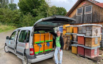 06.08.21 Millifera Bienen bekommen ein neues Zuhause in Patersbach
